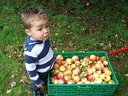 Pauly looking a bit glum. No idea why there were plenty of apples!